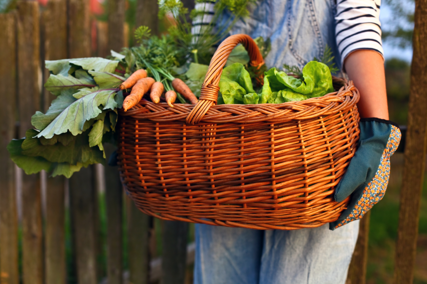 Eight reasons to start your own home garden